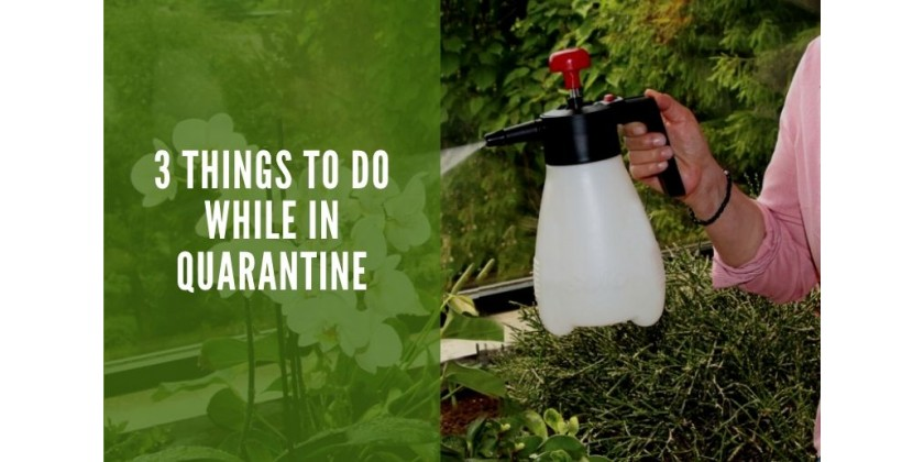 3 Things to Do While in Quarantine