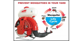 Mosquitoes: Small but Deadly