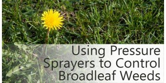 Got Broadleaf Weeds? Fall is the Time to Go After Them!