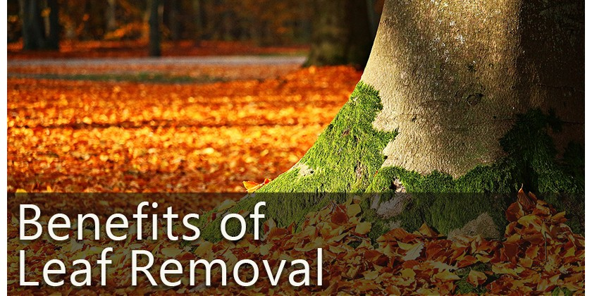 Got Leaves? Get Control of Them with a Backpack Air Blower!