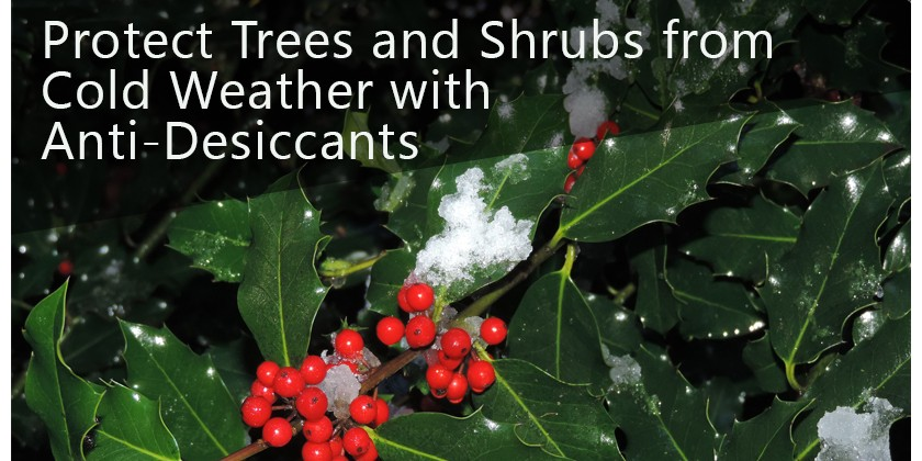 Prepare your evergreens for winter with Anti-Desiccant Spray