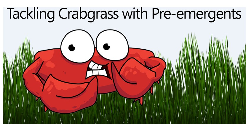 Tackling Crabgrass with Pre-emergents