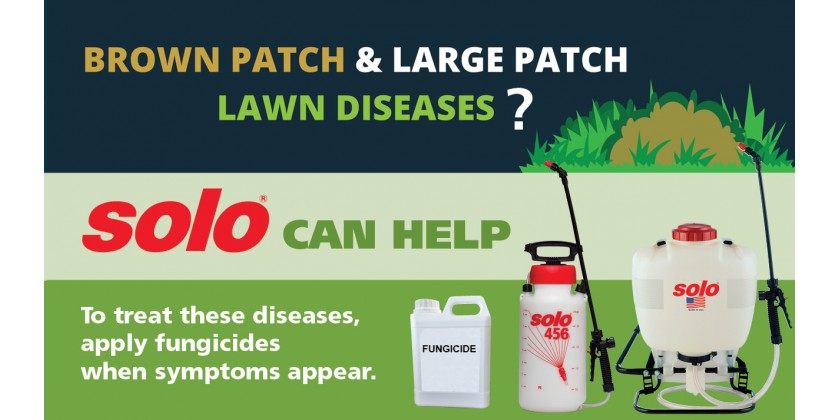 Brown Patch and Large Patch Grass Diseases Infographic