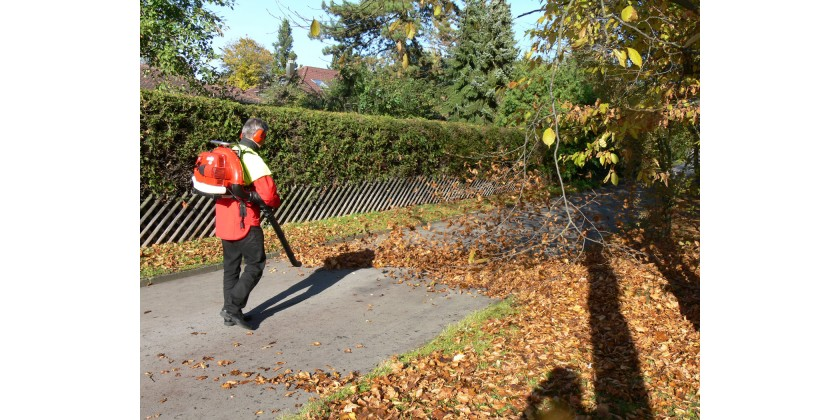 Proper Leaf Cleanup Is a Matter of Lawn Health