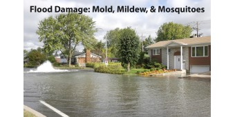 Flood Damage: Mold, Mildew, and Mosquitoes